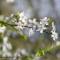 Frühling in Wesel